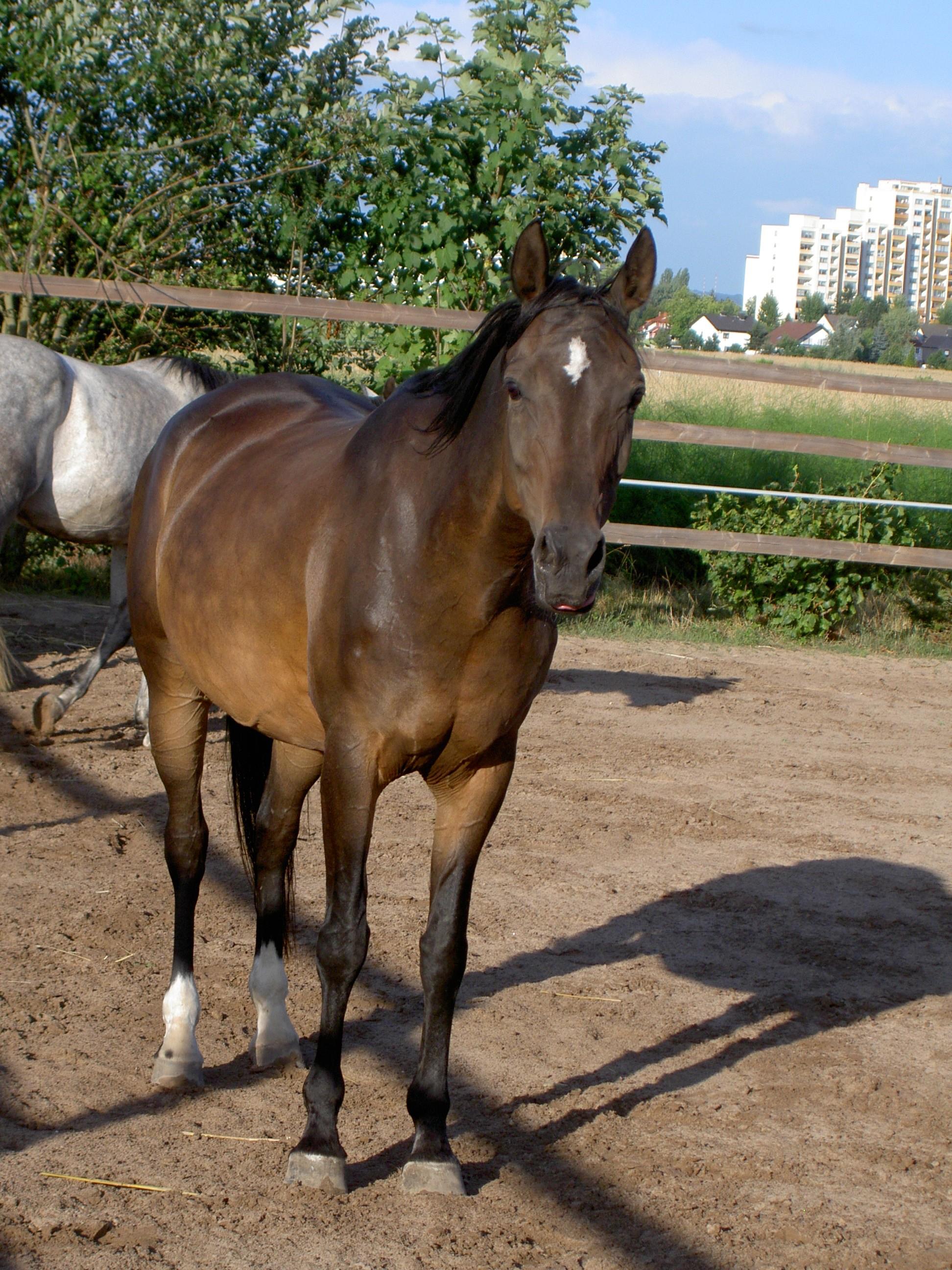 Galina IV