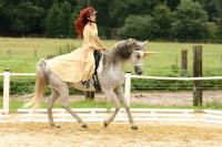 "Freestyle-Kür ""The last unicorn"", Vivien auf Zayana"